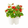 Картридж Click And Grow Mini Tomato Refill для смартпота Click And Grow помидоры черри