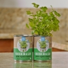 Сад из биоугля Back To The Roots Garden in a Can Cilantro 2 шт. кориандр