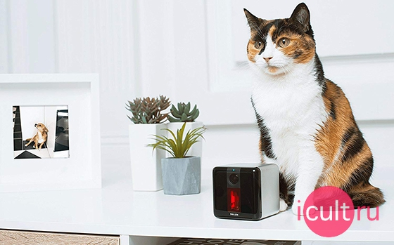 Petcube Play Smart Pet Camera with Interactive Laser Toy Matte Silver