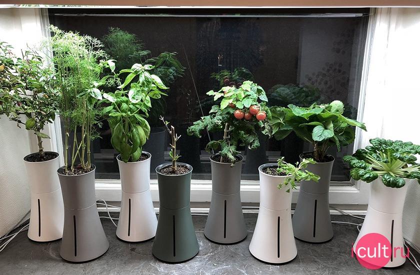 Умная ваза Botanium